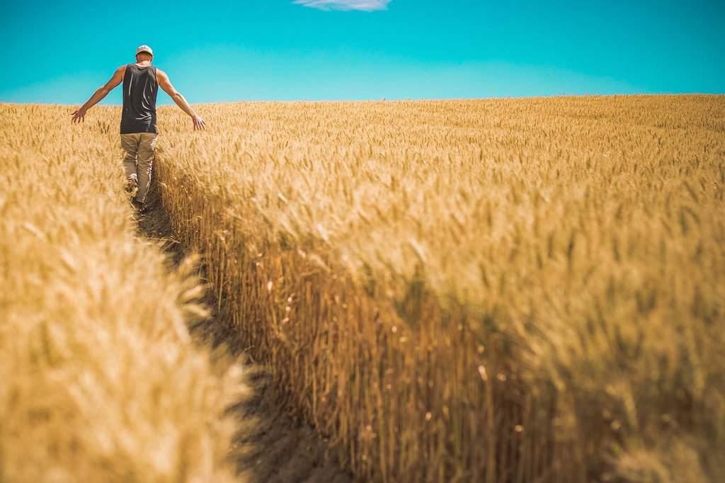 rolnik w polu zboża